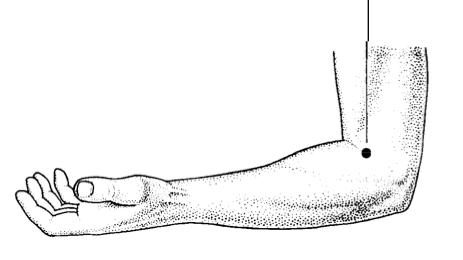Large Intestine 11