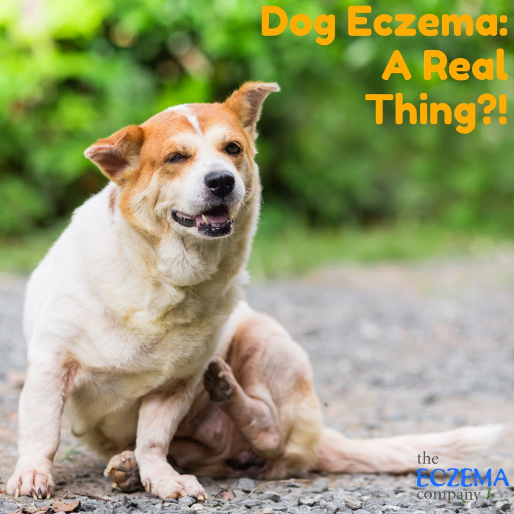 Dog Eczema, Eczema on Dogs, Eczema in Dogs, Dog with Eczema