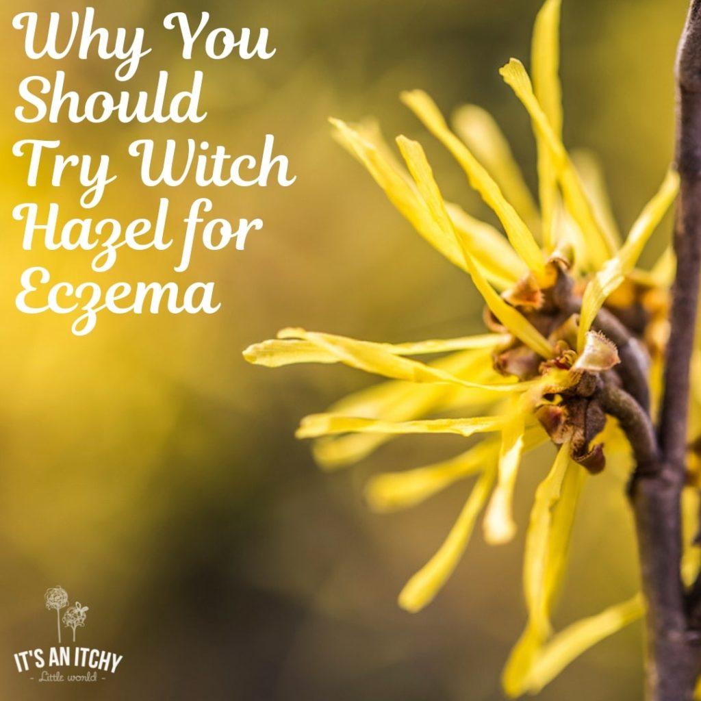 witch hazel for eczema, witch hazel and eczema, witch hazel on eczema-min