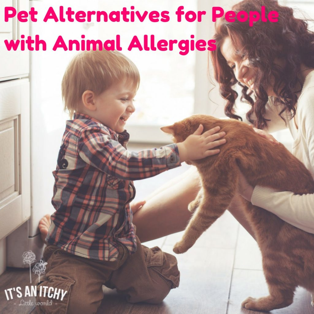 pets for people with allergies