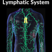 eczema and your lymphatic system